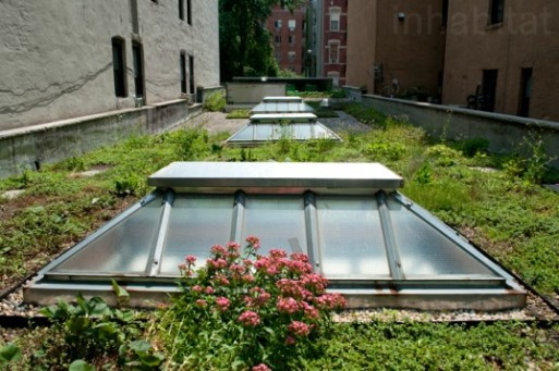 Green roof at Manhattan's Wild Project Theater (Alive Structures).